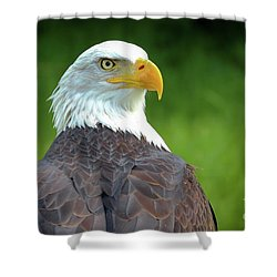 Bald Eagle Shower Curtain by Franziskus Pfleghart