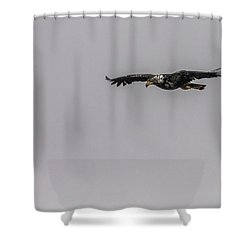 Shower Curtain featuring the photograph Bald Eagle Gliding by Timothy Latta