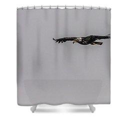 Bald Eagle Gliding Shower Curtain by Timothy Latta