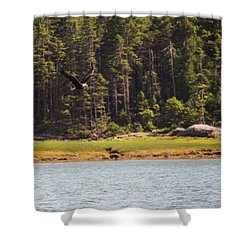 Shower Curtain featuring the photograph Bald Eagle In Flight by Trace Kittrell