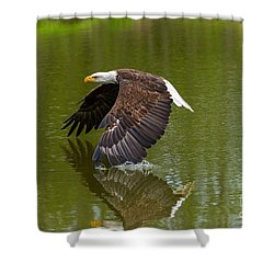Bald Eagle In Low Flight Over A Lake Shower Curtain by Les Palenik