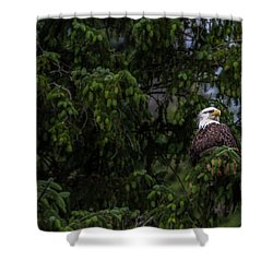 Bald Eagle In The Tree Shower Curtain by Timothy Latta