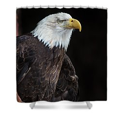 Bald Eagle Intensity Shower Curtain