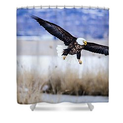 Shower Curtain featuring the photograph Bald Eagle Landing by Bryan Carter