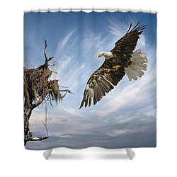 Shower Curtain featuring the photograph Bald Eagle Landing On Old Nest by Brian Tarr
