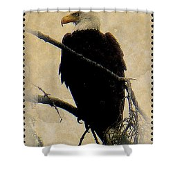 Shower Curtain featuring the photograph Bald Eagle by Lori Seaman