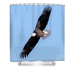 Bald Eagle Overhead  Shower Curtain by Ricky L Jones