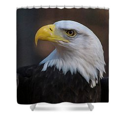 Shower Curtain featuring the digital art Bald Eagle Painting by Chris Flees