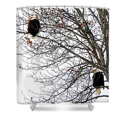 Shower Curtain featuring the photograph Bald Eagle Pair by Will Borden