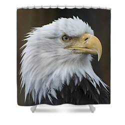 Shower Curtain featuring the photograph Bald Eagle Portrait by Gary Lengyel