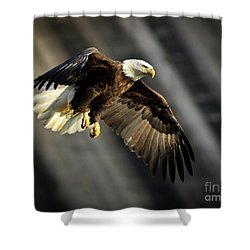 Bald Eagle Prepares To Dive Shower Curtain