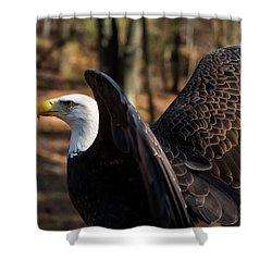 Bald Eagle Preparing For Flight Shower Curtain