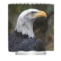 Bald Eagle Profile Shower Curtain