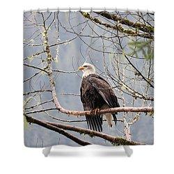 Bald Eagle Resting Shower Curtain
