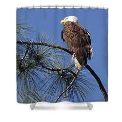 Bald Eagle Shower Curtain by Sally Weigand