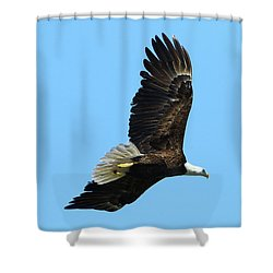 Shower Curtain featuring the photograph Bald Eagle Series IIi by Deborah Benoit