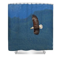 Shower Curtain featuring the photograph Bald Eagle Soaring  by Sharon Talson