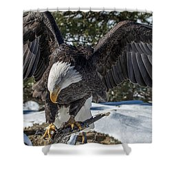Bald Eagle Spread Shower Curtain