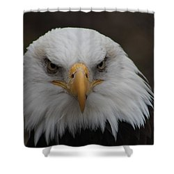 Bald Eagle Stare  Shower Curtain