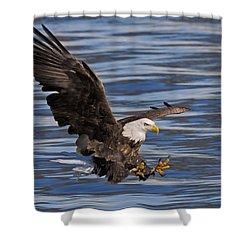 Bald Eagle Strike Shower Curtain