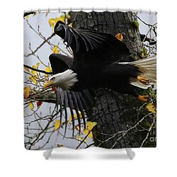 Bald Eagle Takes Flight Shower Curtain