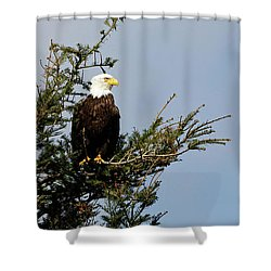 Bald Eagle - Taking A Break Shower Curtain