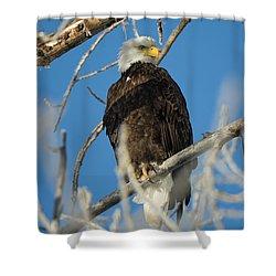 Bald Eagle With Pogo Nip Shower Curtain