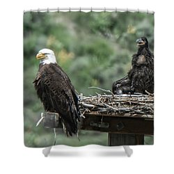 Bald Eaglet Cooling Off On A Hot Spring Day Shower Curtain