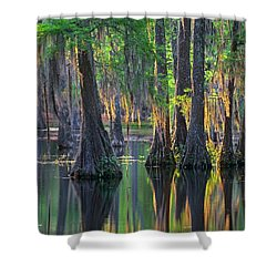 Baldcypress Trees, Louisiana Shower Curtain