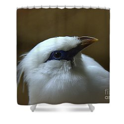 Shower Curtain featuring the photograph Bali Mynah by Lisa L Silva