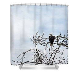 Shower Curtain featuring the photograph Balk Eagle by Rebecca Cozart