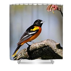 Baltimore Oriole Shower Curtain by Christina Rollo