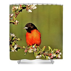 Baltimore Oriole Shower Curtain by James F Towne