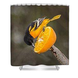 Baltimore Oriole On Orange Shower Curtain