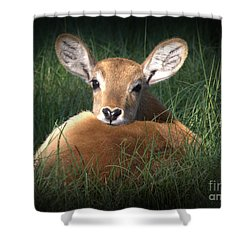 Bambi Shower Curtain by Kim Henderson