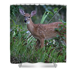 Bambi Shower Curtain by Rick Friedle
