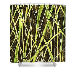 Shower Curtain featuring the painting Bambo Garden by Shabnam Nassir