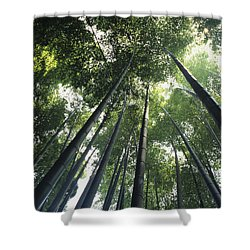 Bamboo Forest Shower Curtain by Mitch Warner - Printscapes