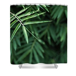 Shower Curtain featuring the photograph Bamboo Leaves Background by Jingjits Photography