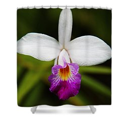 Shower Curtain featuring the photograph Bamboo Orchid  by Kerri Ligatich