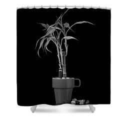 Shower Curtain featuring the photograph Bamboo Plant by Tom Mc Nemar