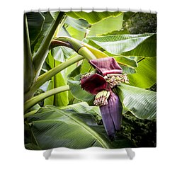 Shower Curtain featuring the photograph Banana Beginnings Square by Kerri Ligatich