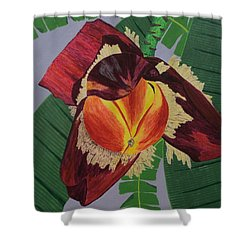 Banana Blossom Shower Curtain by Hilda and Jose Garrancho