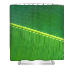 Banana Leaf Shower Curtain by Dana Edmunds - Printscapes