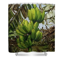 Shower Curtain featuring the painting Banana Tree by Chonkhet Phanwichien