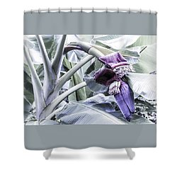 Shower Curtain featuring the photograph Banana Beginnings In Cool Shades by Kerri Ligatich