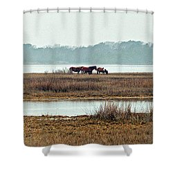 Band Of Wild Horses Along Sinepuxent Bay Shower Curtain