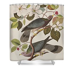 Band-tailed Pigeon  Shower Curtain by John James Audubon
