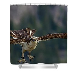 Banded But Bold Shower Curtain by Yeates Photography