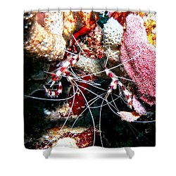 Banded Coral Shrimp - Caught In The Act Shower Curtain